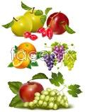 Fruit vector material