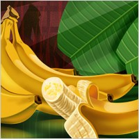 Link toFruits - bananas psd layered material
