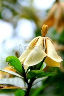 Link topictures hd Gardenia