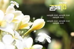 Link toGardenia yellow burmese plumeria flowers vector