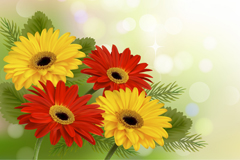 Gerbera in color vector background