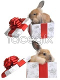 Link toGift in rabbits hd pictures psd