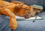 Link toGlasses, sleeping dogs psd