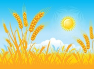 Golden field background vector free