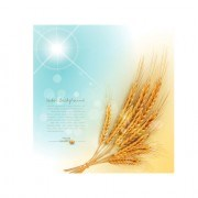 Link toGolden wheat background vector set 03