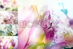 Link toGorgeous flowers psd