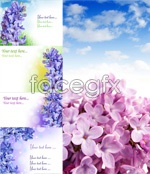 Link toGorgeous lilac psd
