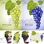 Link toGrape leaves grape vector