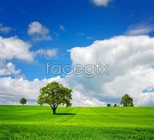Link topicture scenery sky Grass