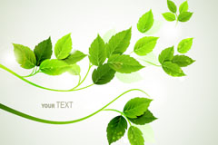Link toGreen background foliage vector
