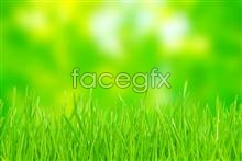 Link topicture landscape grass Green
