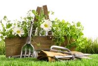Link toGreen idyllic life hd pictures