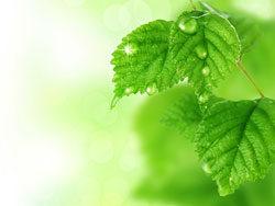 Link toGreen leaf background 01-hd pictures