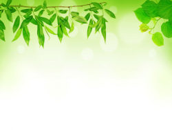 Link toGreen leaf background 04-hd pictures