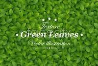 Link toGreen leaf background design vector