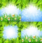 Green leaf chamomile vector