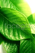 Link toGreen leaf close-up psd