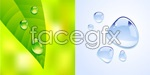 Link toGreen leaf drops vector