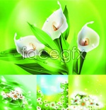 Link toGreen leaf flower vector
