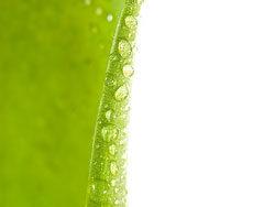Link toGreen leaf hd photo-2