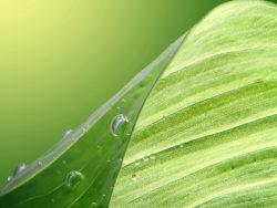 Link toGreen leaf hd photo-4
