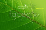 Link toGreen leaf of a water droplet psd