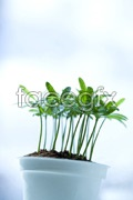 Link toGreen leaf seedlings psd