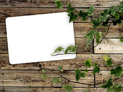 Link toGreen leaf wood background 05-hd pictures