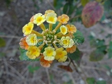 Link topictures hd flowers leaves Green