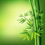 Link toGreen leaves of bamboo vector