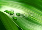 Link toGreen leaves with water drops psd