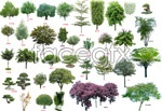 Link toGreen shrub plants psd