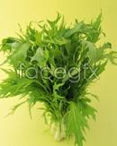 Link toGreen vegetables psd