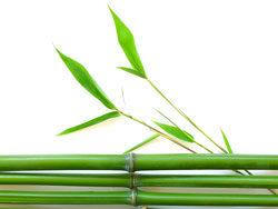 Link toGreen vegetation 06-hd pictures