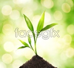 Link toGrowth of green plants psd