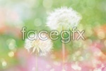 Link toHalo dandelion psd