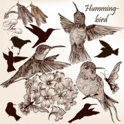 Link toHand drawn birds vintage style vector 02 free