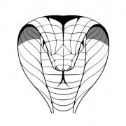 Link toHand drawn cobra design vector free