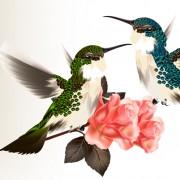 Link toHand drawn hummingbird vector 02 free