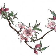 Link toHand drawn peach blossom creative vector graphics free