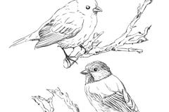 Link toHand-painted bird design vector