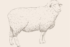 Link toHand-painted docile sheep, vector