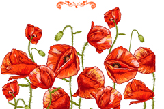 Link toHand painted poppies anti-drug vector illustration
