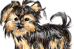 Link toHand-painted shih tzus vector