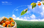 Link toHarvest persimmons psd