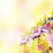 Link toHd autumn flowers pictures