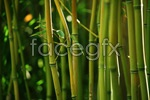 Link toHd bamboo pictures psd