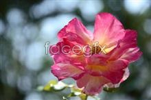Link toHd beautiful flower pictures