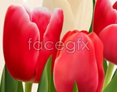 Link tobackground flower vector tulip beautiful Hd