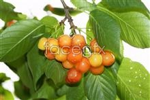 Link toHd cherry tree pictures